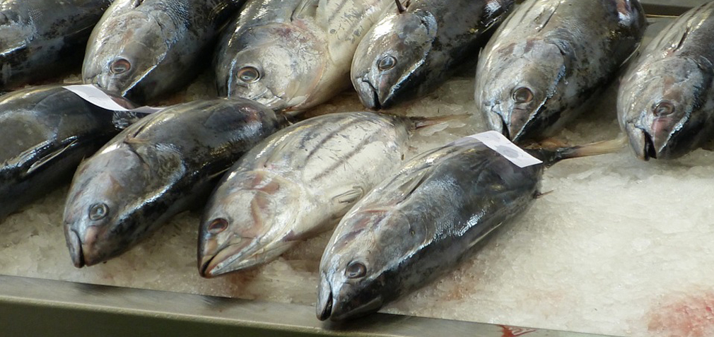 тунец свежемороженный