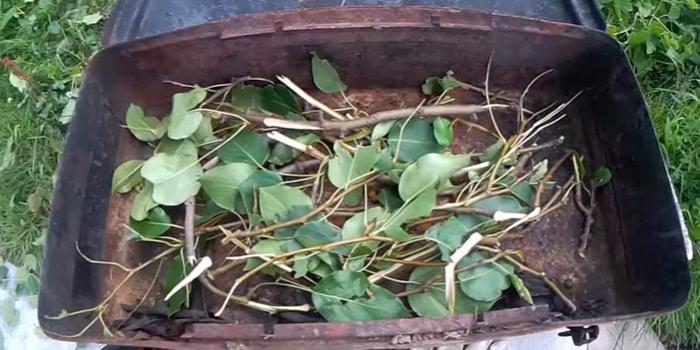 грушевые ветки в коптильне