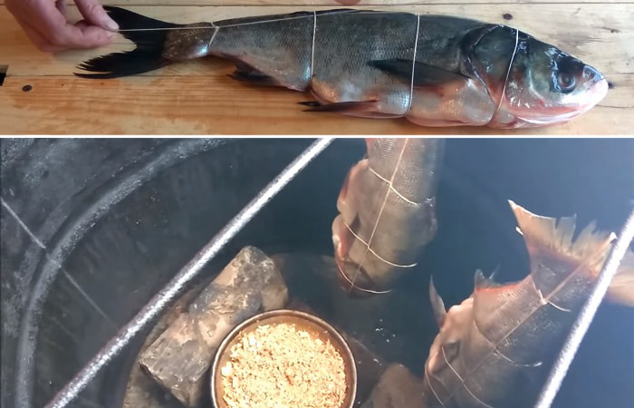 обвязка рыбы