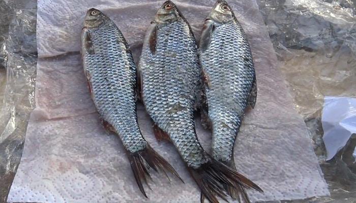 Рыба засоленная сухим методом