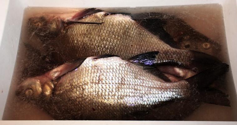 Мокрая засолка рыбы