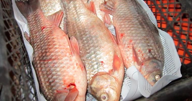 Обсушка рыбы