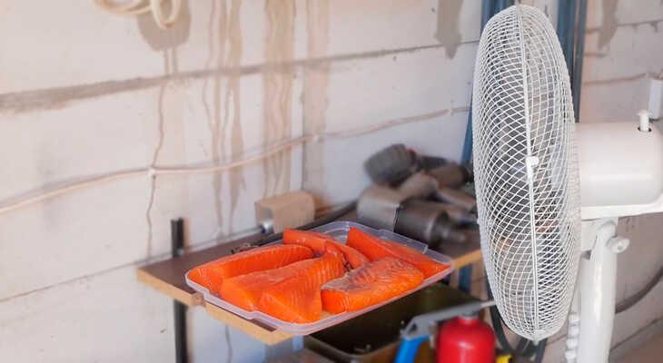 Просушивание рыбы под вентилятором