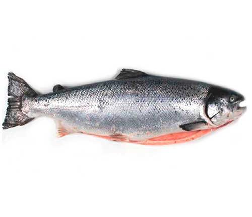 Тушка лосося
