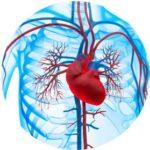 Укрепление сердца и сосудов