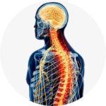 Защита нервной системы