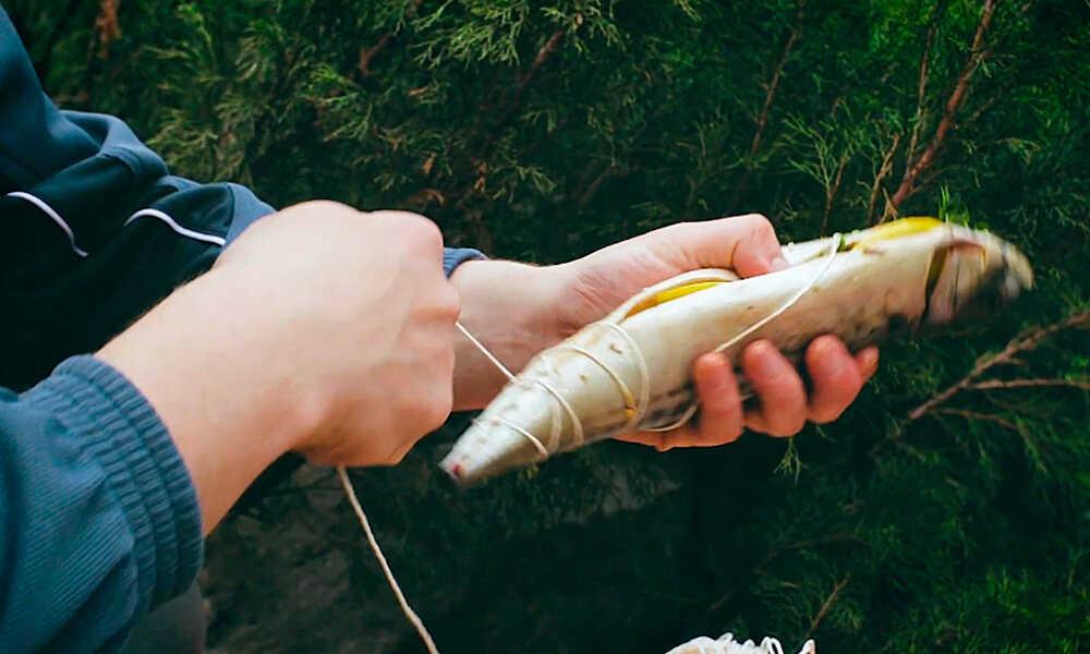 Обвязывают рыбу
