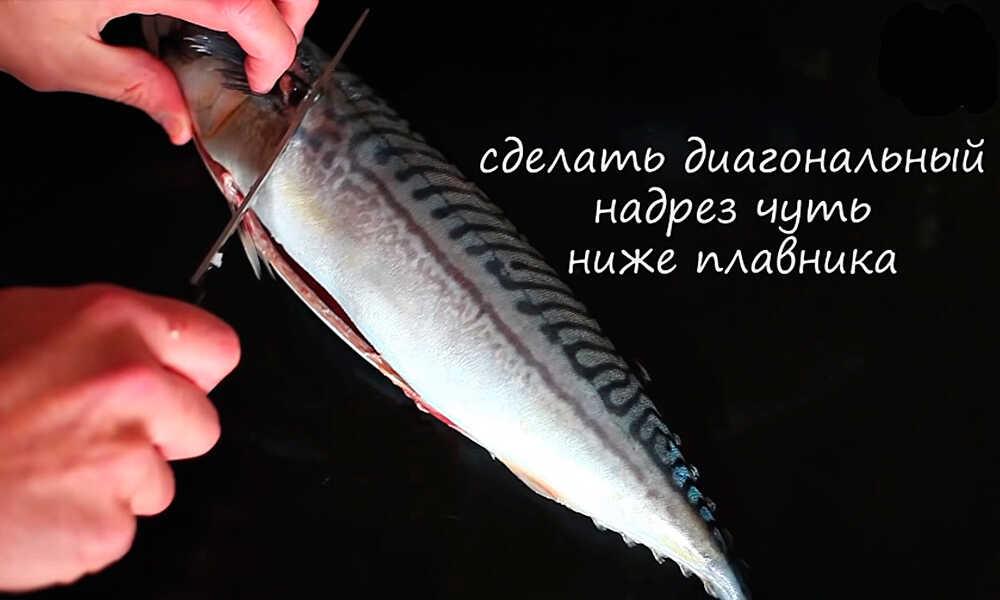 Отрезают голову у рыбы за плавниками